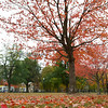 Boston Common in the Fall