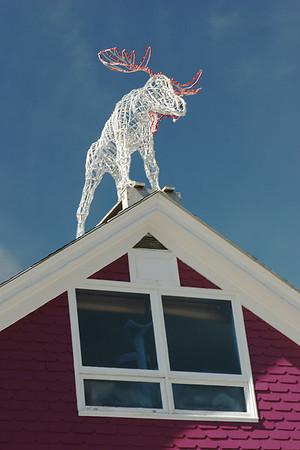 Geddi's Christmas moose!