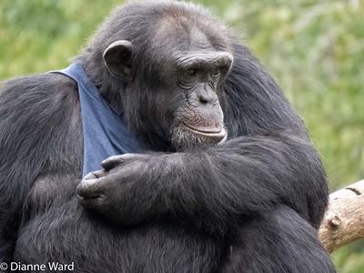 Southwick Zoo