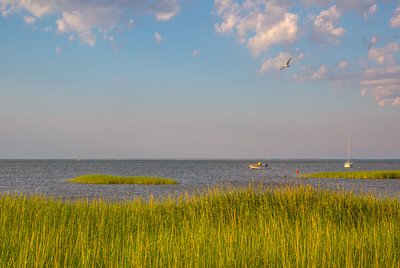 Boats and bird at Paines Creek Landing and Beach, Brewster, Cape Cod, Massachusetts, USA