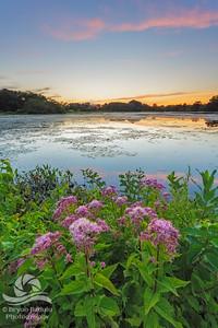 Shad Pond Sunset