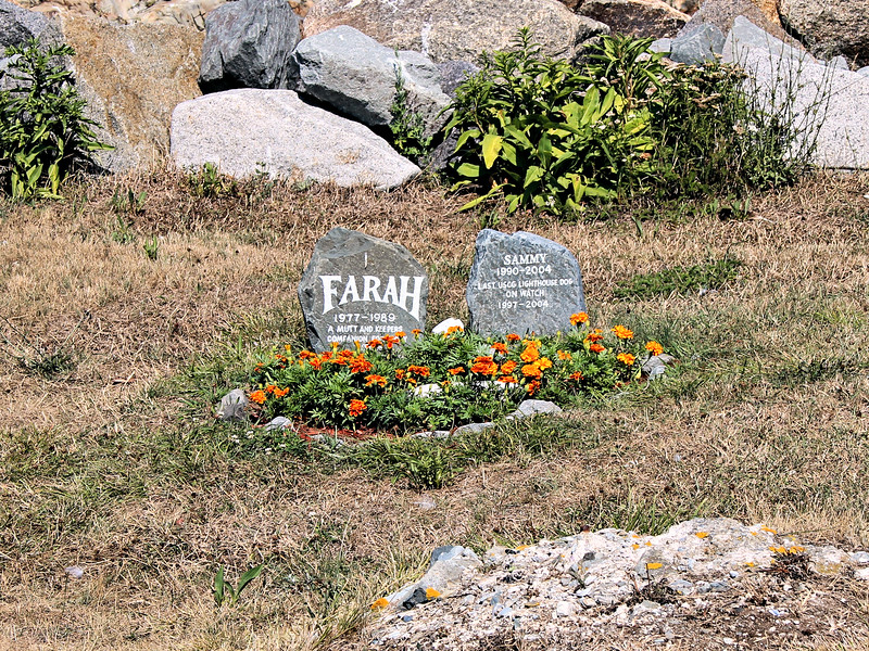 A cemetery is maintained for the former canine mascots of Boston Light near the cistern building.