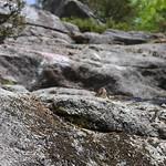 Massebesic Cliff Trail