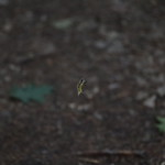 Massebesic Small Creatures and Plants 38