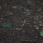 Massebesic Small Creatures and Plants 37