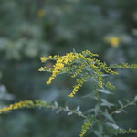 Massebesic Small Creatures and Plants 2