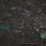 Massebesic Small Creatures and Plants 39
