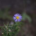 Massebesic Small Creatures and Plants 14