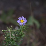 Massebesic Small Creatures and Plants 13
