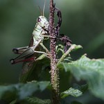 Massebesic Small Creatures and Plants 41
