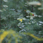 Massebesic Small Creatures and Plants 3