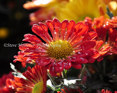 (Flowers 16)