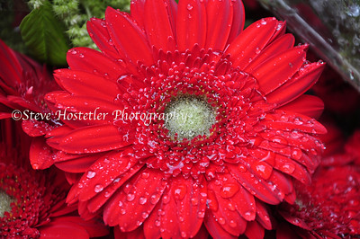 (Flowers 5)
