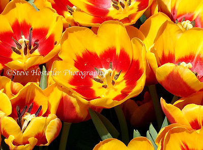 (Flowers 1)