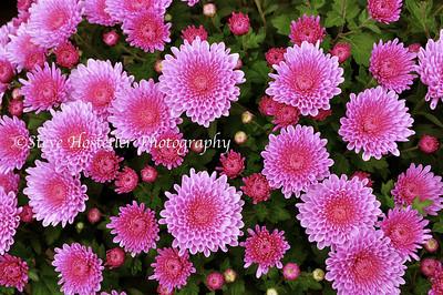(Flowers 10)