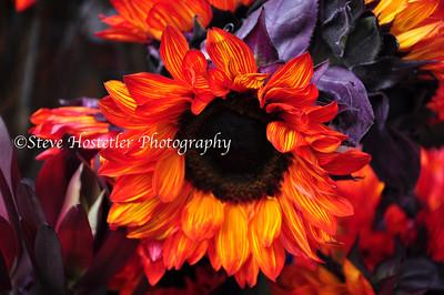 (Flowers 3)