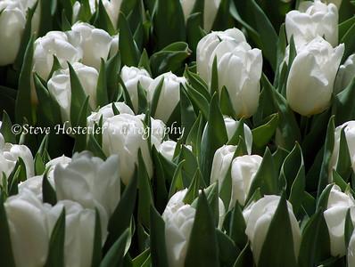 (Flowers 13)