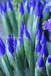 (Flowers 4)