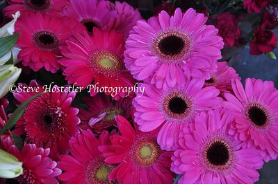 (Flowers 6)