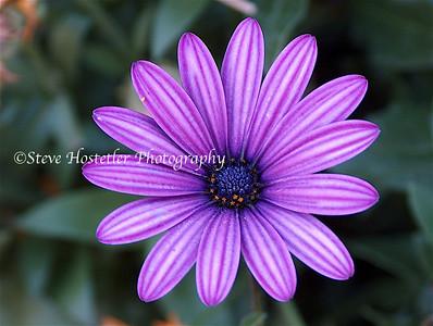 (Flowers 23)