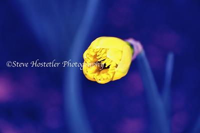 (Flowers 12)