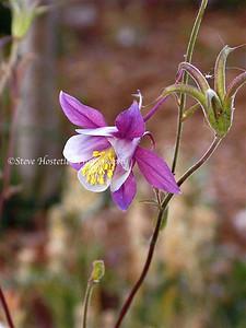 (Flowers 24)