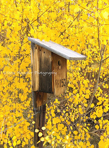 Bird House - Kenosha Pass - Colorado (L20)