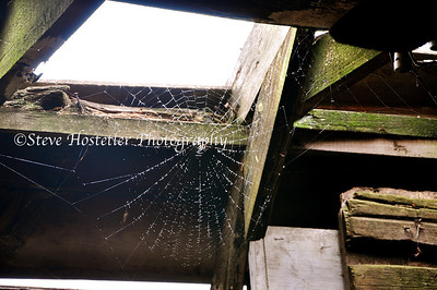 Barn Spider Web, Estherville, IA (L54)