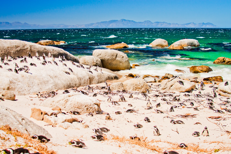 Cape Point South Africa 7: Journey into Africa