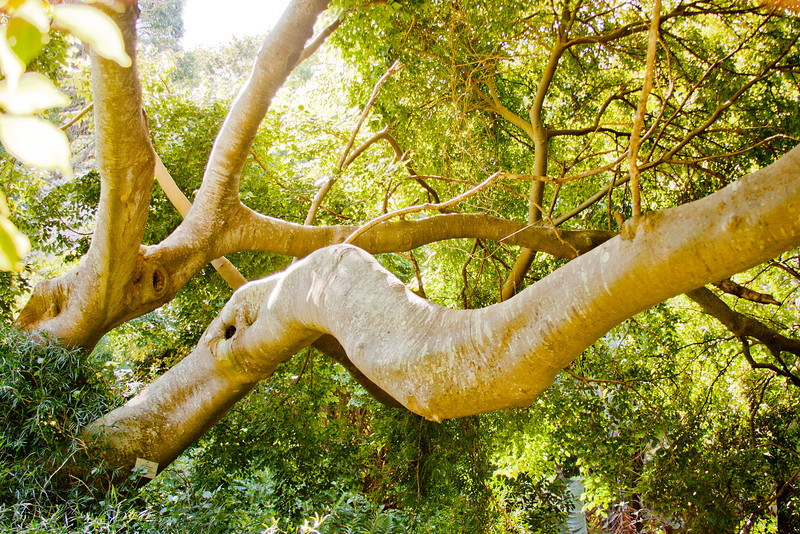Cape Town Botanical Gardens 6: Journey into South Africa