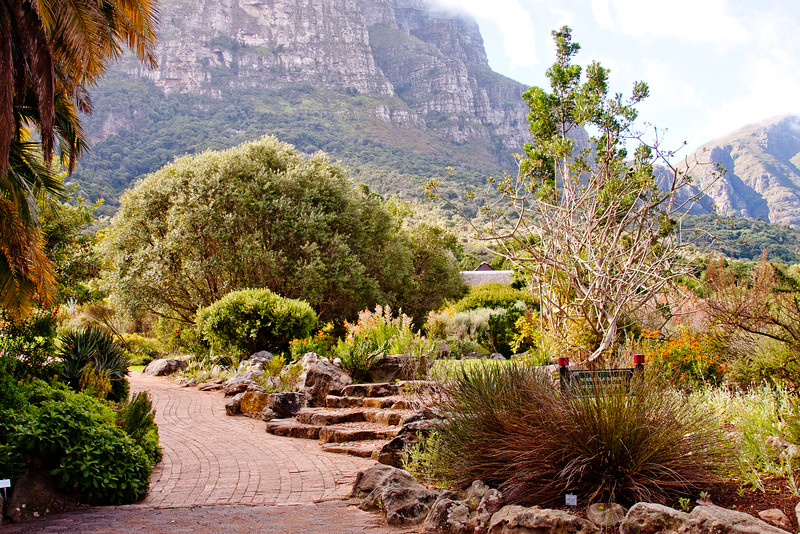 Cape Town Botanical Gardens 9: Journey into South Africa