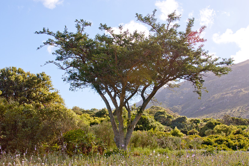 Cape Town Botanical Gardens 8: Journey into South Africa