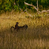 Nature and Wildlife in Zambia 13: Journey into Africa