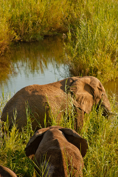 Nature and Wildlife in Zambia 22: Journey into Africa