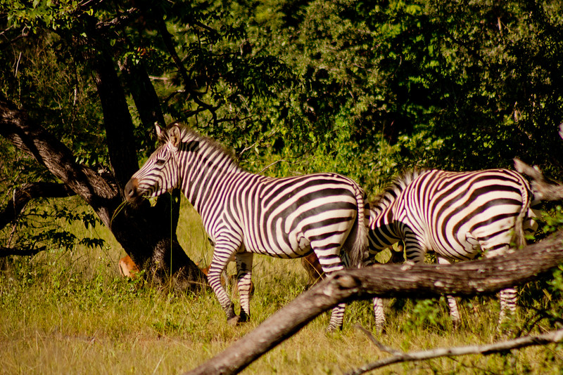 Nature and Wildlife in Zambia 10: Journey into Africa