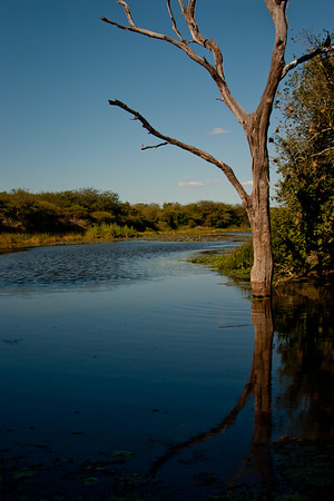 Nature and Wildlife in Zambia 21: Journey into Africa