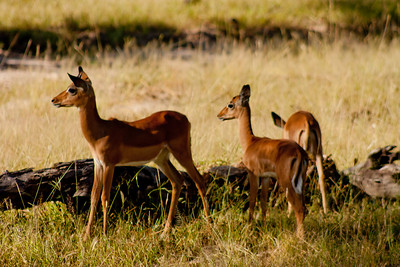 Nature and Wildlife in Zambia 9: Journey into Africa