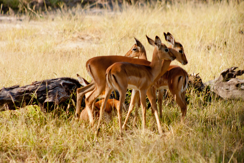 Nature and Wildlife in Zambia 8: Journey into Africa