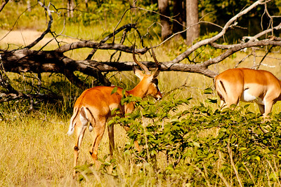 Nature and Wildlife in Zambia 6: Journey into Africa