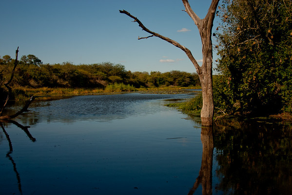 Nature and Wildlife in Zambia 20: Journey into Africa
