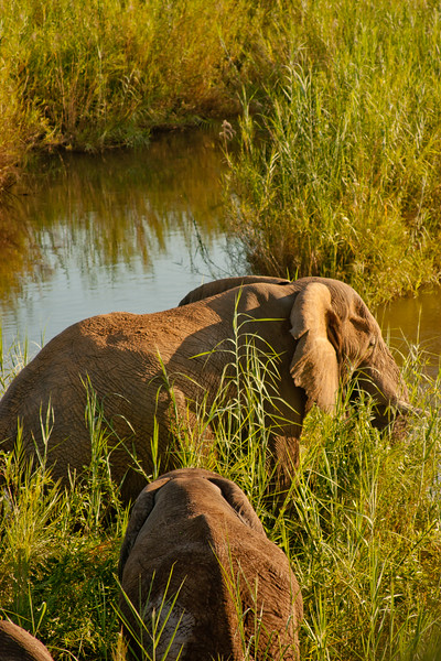 Nature and Wildlife in Zambia 23: Journey into Africa