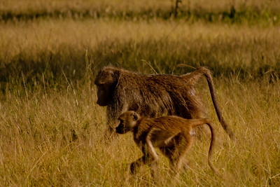 Nature and Wildlife in Zambia 14: Journey into Africa
