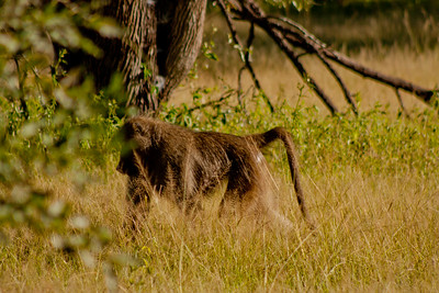 Nature and Wildlife in Zambia 11: Journey into Africa