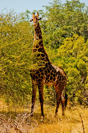 Nature and Wildlife in Zambia 19: Journey into Africa