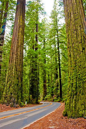 Redwood National Park 3: Journey to the National Parks