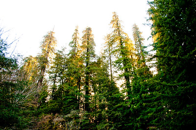 Redwood National Park 7: Journey to the National Parks