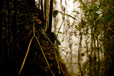 Journey into the Mountains 4: Bellavista Cloud Forest Reserve Journey into Ecuador
