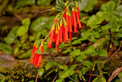 Journey into the Mountains 11: Bellavista Cloud Forest Reserve Journey into Ecuador
