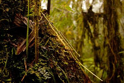 Journey into the Mountains 1: Bellavista Cloud Forest Reserve Journey into Ecuador