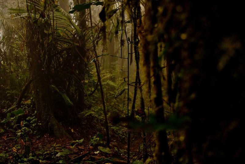 Journey into the Mountains 6: Bellavista Cloud Forest Reserve Journey into Ecuador